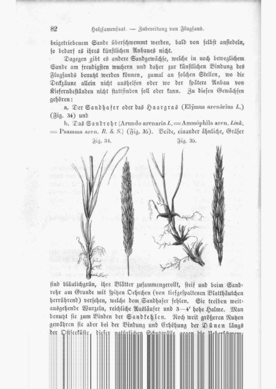 Heyer C. (1864): Der Waldbau