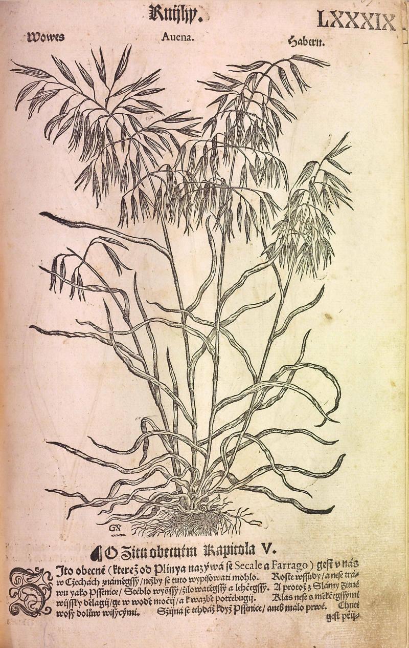 Pérovka z: Matthioli Pierandrea: Herbář (1562)