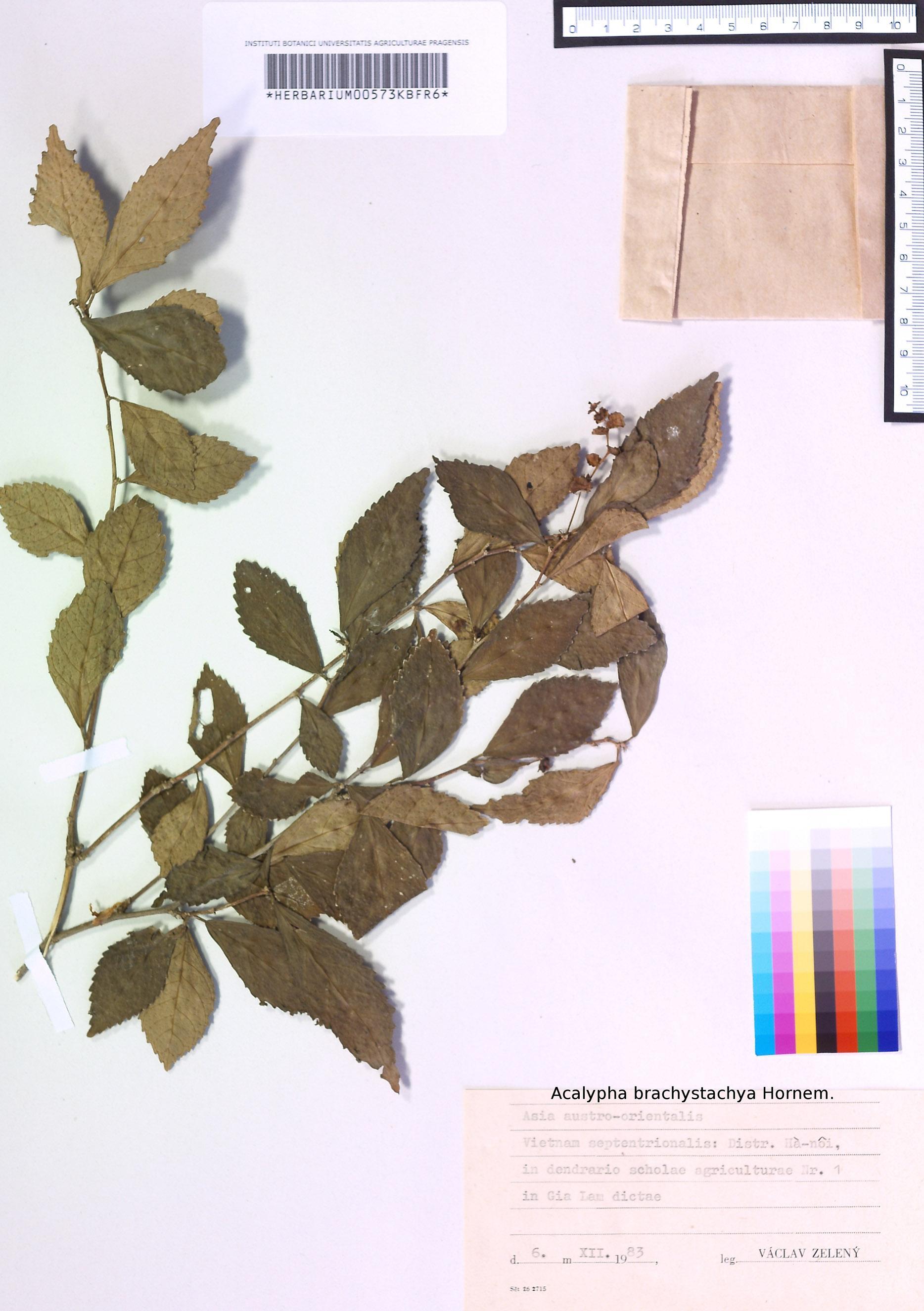 Herbářová položka z Vietnamu