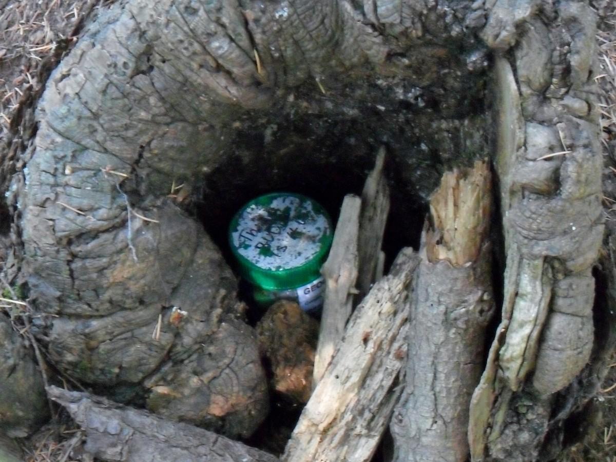 Schránka ukrytá v dutině stromu