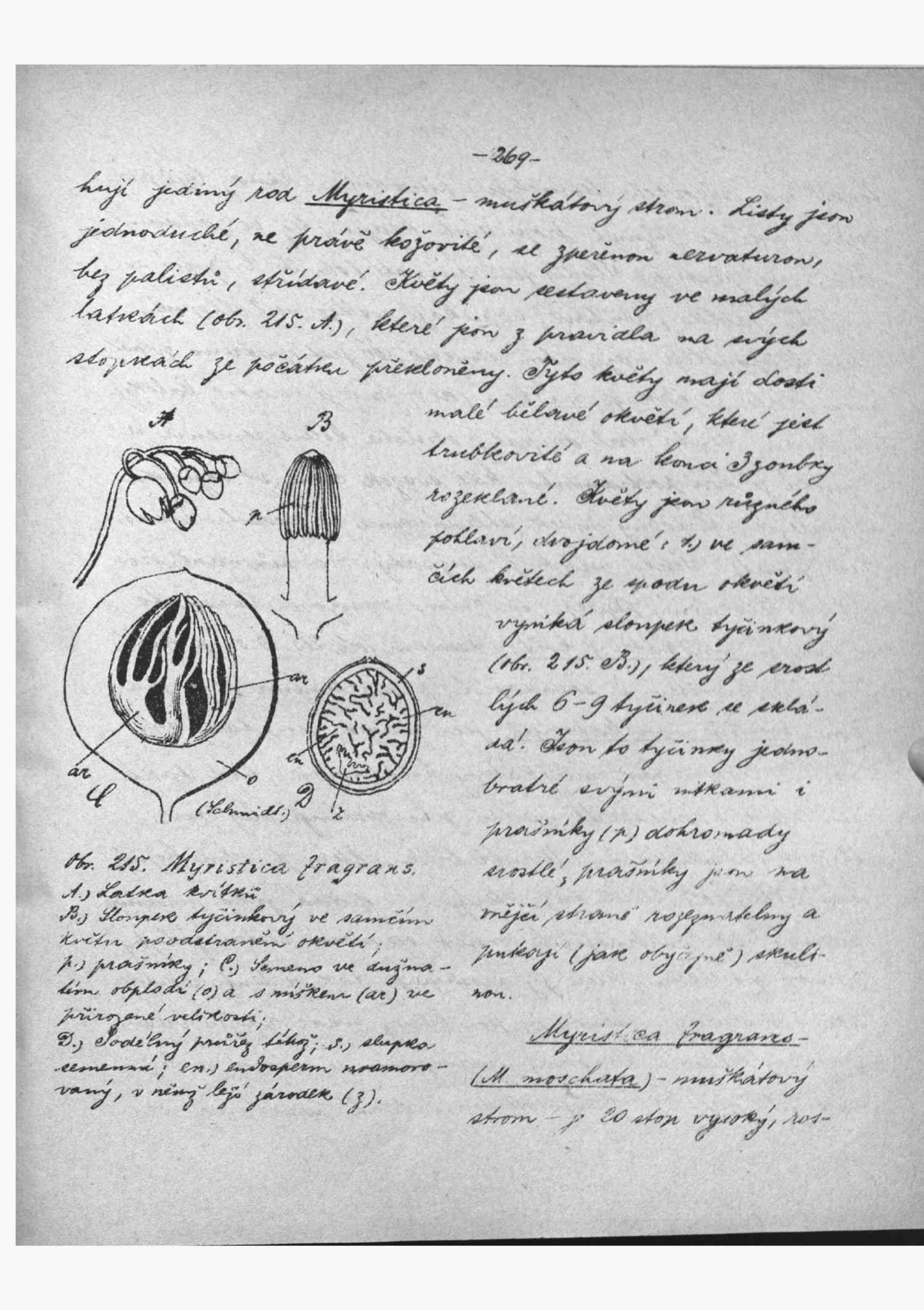 Čelakovský L. (1889?): Specielní botanika (skriptum)