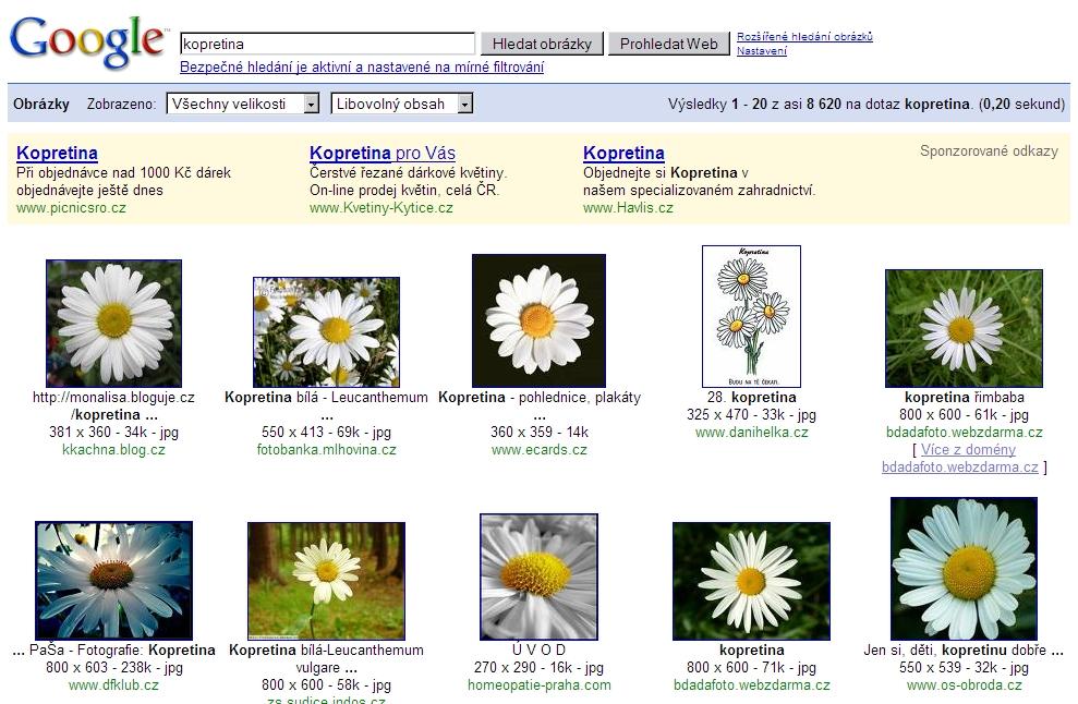 Obrázek 4: Hledání obrázku kopretiny – výsledky získané pomocí Googlu