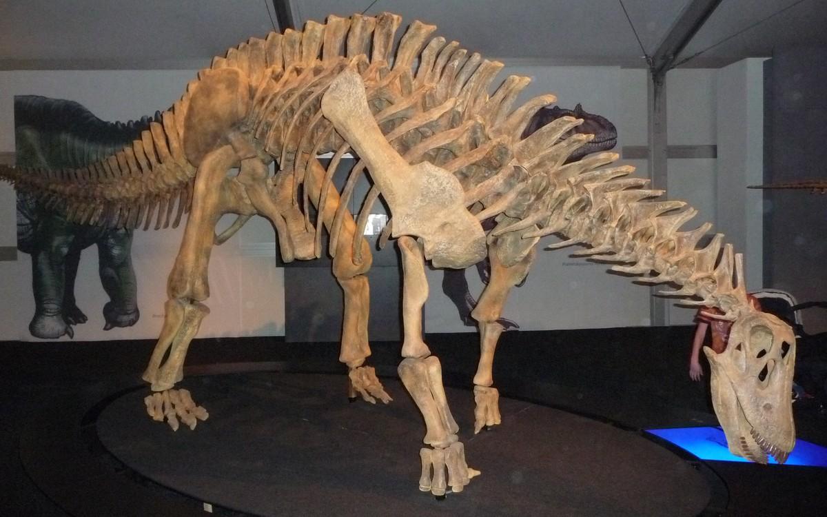 Obr. 14: Výstava argentinských dinosaurů probíhá vedle výstaviště i po skončení veletrhu