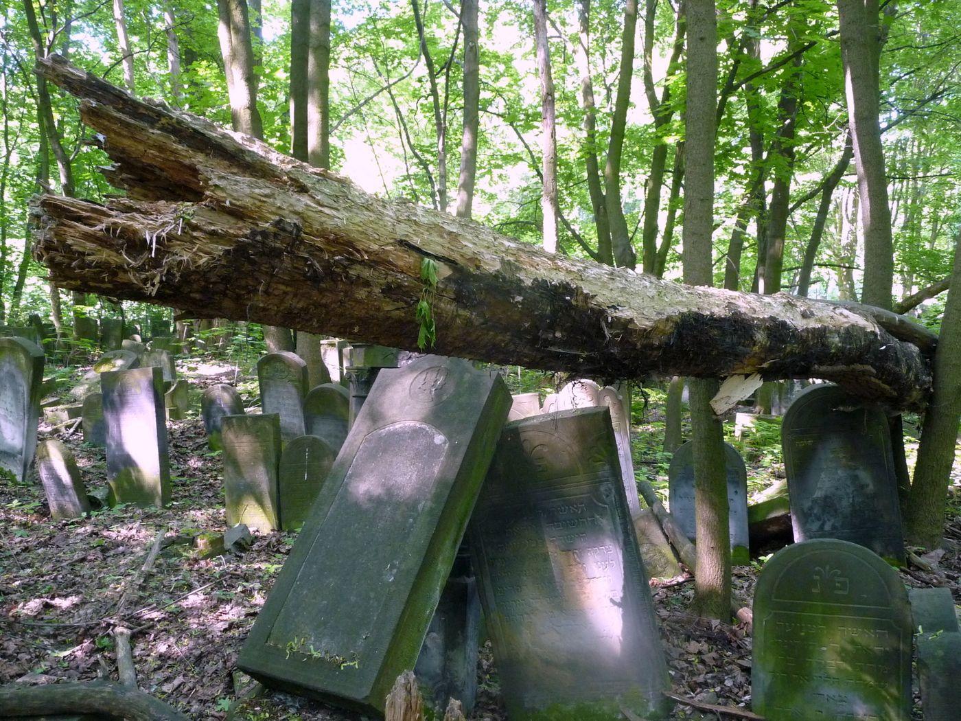 Zarostrlý židovský hřbitov ve Varšavě